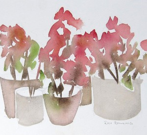 Morrocan Geraniums